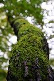 Grön skönhet arkivbild