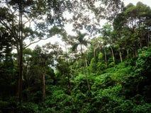 Grön skog Arkivfoto