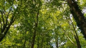 Grön skog arkivfilmer