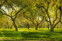 Grön skog Arkivbilder