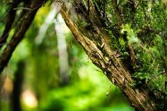 Grön skog Royaltyfri Bild