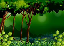 Grön skog stock illustrationer