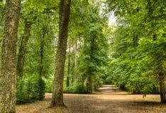 Grön skog Fotografering för Bildbyråer