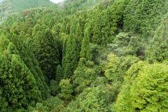 Grön skog arkivfoton