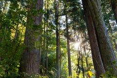 Grön skog royaltyfri foto