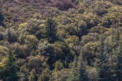 Grön skog Royaltyfria Foton