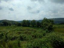 Grön skog för berg Arkivbilder