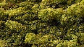Grön skog för mossatexturcloseup efter regn arkivfoton