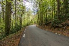 Grön skog för natur arkivfoto