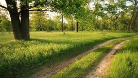 Grön skog för sommar och bygdväg lager videofilmer