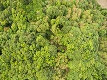 Grön skog från över fotografering för bildbyråer