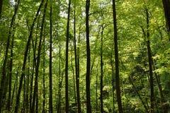 Grön skog, Georgia, USA Arkivbild