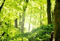 Grön skog i vårsäsong arkivfoto