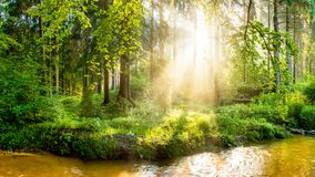 Grön skog med bäcken och solen royaltyfri foto