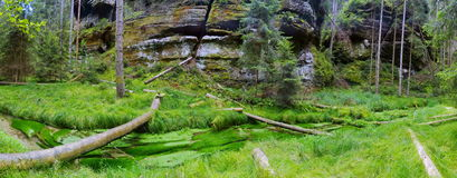 Grön skog med The Creek Arkivfoton