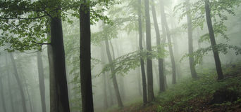 Grön skog med dimma Arkivfoto