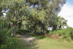 Grön skog med höga träd och liten sjö i den Gå för sommar Arkivfoton