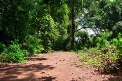 Grön skog med vägen i solig dag Arkivbild