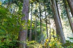 Grön skog och solljus royaltyfri fotografi