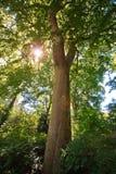 Grön skog på solig dag Fotografering för Bildbyråer