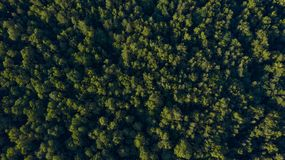 Grön skog på solnedgången, över huvudet sikt arkivfoton