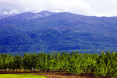 Grön skog under det snöig berget Fotografering för Bildbyråer