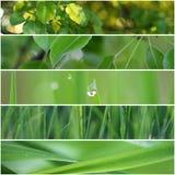Grön skogcollage för vår Arkivbild