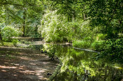 Grön skogflod Royaltyfria Foton