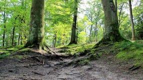 Grön skoggångbana efter regn arkivbilder