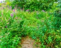 Grön skoglandskap med lilablommor och fullvuxet med växter royaltyfri bild