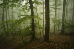 Grön skognatur med dimma Royaltyfria Bilder
