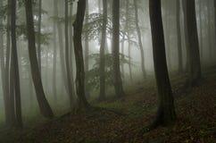 Grön skognatur med dimma Royaltyfri Fotografi