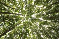 Grön skognaturbakgrund Arkivbilder