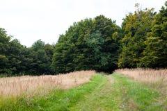 Grön skogväg Arkivfoto