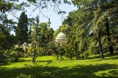 Grön skogvår arkivbild