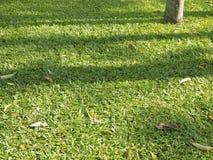 Grön skuggagräsmatta Arkivbilder