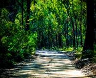 Grön skuggig bana Fotografering för Bildbyråer
