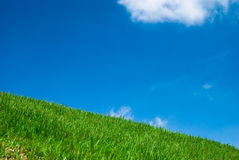 grön sky för blågräs under Arkivfoto
