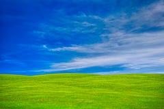 grön sky för fält royaltyfri foto