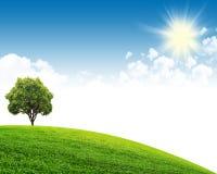 grön sky för fält Arkivbilder