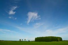 grön sky för härliga fält Royaltyfri Bild