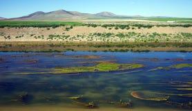 Grön slam i flodberget Arkivbild