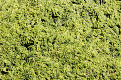grön slime royaltyfria foton