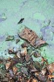 grön slime arkivfoto