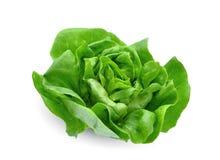 Grön smörgrönsallatgrönsak eller sallad som isoleras på vit fotografering för bildbyråer