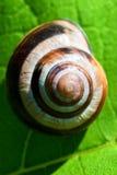 grön snail royaltyfria foton