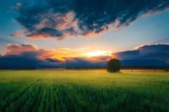 grön solnedgång för fält Royaltyfria Bilder
