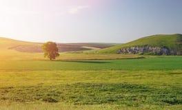 grön solnedgång för fält Royaltyfri Foto