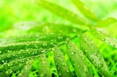 Grön sommar fotografering för bildbyråer