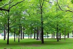 grön sommar Arkivbilder